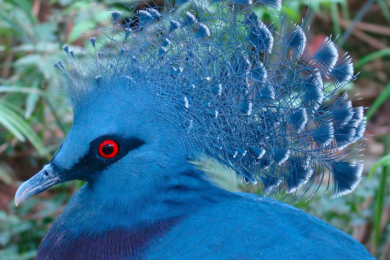 фото и названия редких птиц уверенно расширяет