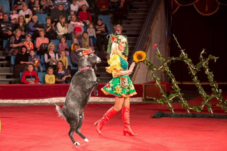 картинки артисты цирка животные распространяется при контакте